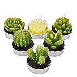 LA BELLEFÉE Velas Suculentas Plantas Cactus Decorativas para Casa Regalos para Halloween Cumpleaños Fiestas Boda Adorables Regalos para los Amantes de Suculentas